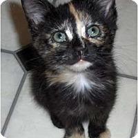 Adopt A Pet :: Tinkerbell - Richmond, VA