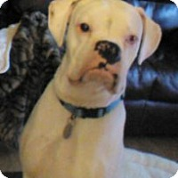 Adopt A Pet :: Brody Blue - Dayton, OH