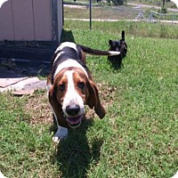 Adopt A Pet :: Jagger - Albuquerque, NM