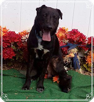Labrador Retriever Mix Dog for adoption in Marietta, Georgia - CARUSO - adopted @ off-site