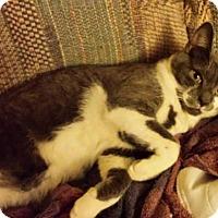 Adopt A Pet :: Rikki - brewerton, NY