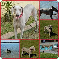 Adopt A Pet :: Oliver - Inverness, FL