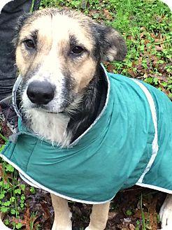 Shepherd (Unknown Type) Mix Dog for adoption in Sacramento, California - KT!
