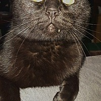 Adopt A Pet :: Wayne - Braidwood, IL