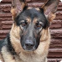 Adopt A Pet :: Miles von Miesbach - Los Angeles, CA