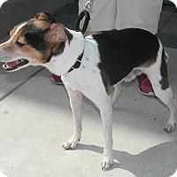 Adopt A Pet :: George - Umatilla, FL