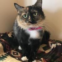 Adopt A Pet :: Lollie *VIP* - Houston, TX
