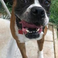 Adopt A Pet :: JoJo Adkins - Harrah, OK