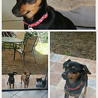 Adopt A Pet :: Lucky - Homestead, FL