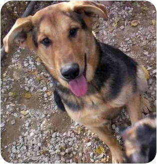 Shepherd (Unknown Type) Mix Dog for adoption in Cold Lake, Alberta - Eve