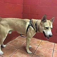 Adopt A Pet :: SIMBA - Downey, CA