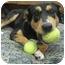 Photo 3 - Border Collie/German Shepherd Dog Mix Dog for adoption in Lake Odessa, Michigan - Tammy