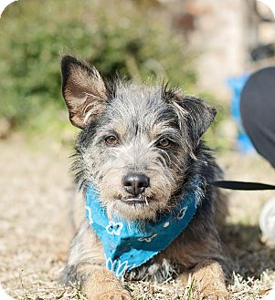 Terrier (Unknown Type, Small) Mix Dog for adoption in Portsmouth, Rhode Island - Stallone