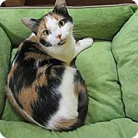 Adopt A Pet :: Cassandra - Mobile, AL