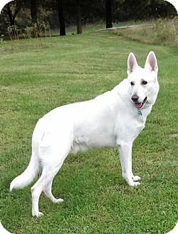 German Shepherd Dog Mix Dog for adoption in Huntingburg, Indiana - Axle