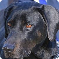 Adopt A Pet :: Dibble - Cincinnati, OH