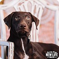 Adopt A Pet :: Louie - Portland, OR