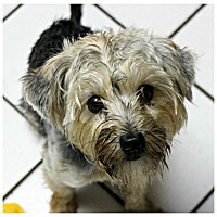 Adopt A Pet :: Anna Pearl - Forked River, NJ