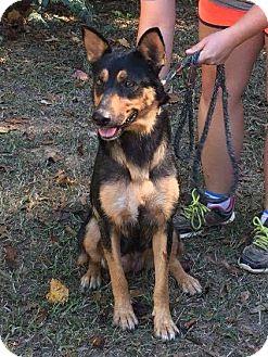 German Shepherd Dog Mix Dog for adoption in Groton, Massachusetts - Mimi