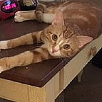 Adopt A Pet :: rowdy - NEWCASTLE, CA