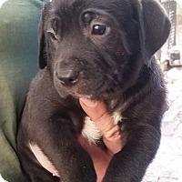 Adopt A Pet :: Fritatta - Gainesville, FL