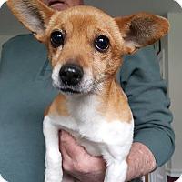 Adopt A Pet :: Tootsie - Andalusia, PA