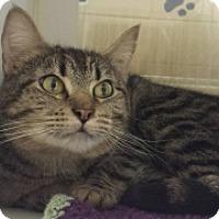 Adopt A Pet :: George Cc 112020 - Joplin, MO
