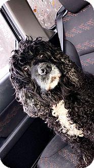 Cocker Spaniel Mix Dog for adoption in Baltimore, Maryland - Paris (COURTESY POST)