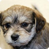 Adopt A Pet :: Lotus - Alamogordo, NM
