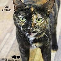 Adopt A Pet :: Ciel - Baton Rouge, LA