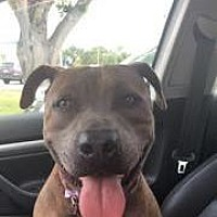 Adopt A Pet :: Asha - Ft. Myers, FL