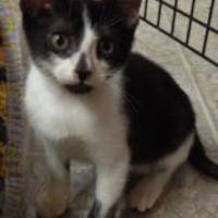 Adopt A Pet :: Beamer / Empaht 4 - Long Beach, CA