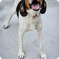Adopt A Pet :: John Smith - Prince George, VA