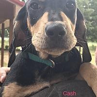 Adopt A Pet :: PayPal Pups - Dallas, TX
