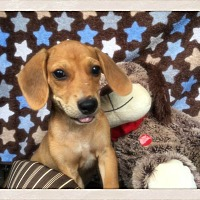 Adopt A Pet :: Riff - Greensboro, GA