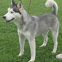 Adopt A Pet :: Huck - Mount Sterling, KY