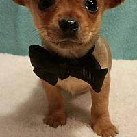 Adopt A Pet :: Gregory - Shreveport, LA