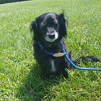 Adopt A Pet :: Scarlett - Hawk Point, MO