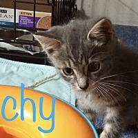 Adopt A Pet :: Archy - Island Park, NY