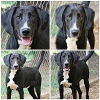 Adopt A Pet :: Ricky - Temple, GA