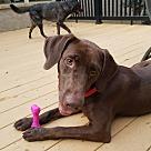 Adopt A Pet :: Heidi