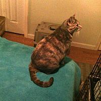 Adopt A Pet :: Silvie - Fayetteville, TN