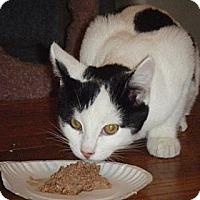 Adopt A Pet :: Sammy - Kensington, MD