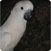 Adopt A Pet :: Sweetie - Redlands, CA