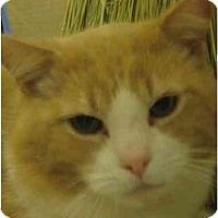 Adopt A Pet :: Cooper - Jenkintown, PA