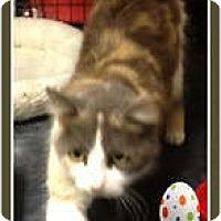 Adopt A Pet :: Janet - Mobile, AL