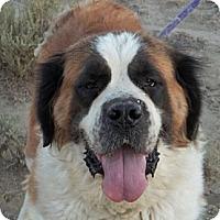 Adopt A Pet :: Ellie - Sparks, NV