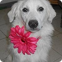 Adopt A Pet :: Meadow - Lockhart, TX