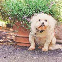 Adopt A Pet :: Bebe - Jacksonville, FL