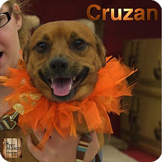 Chihuahua Mix Dog for adoption in Washington, Pennsylvania - Cruzan